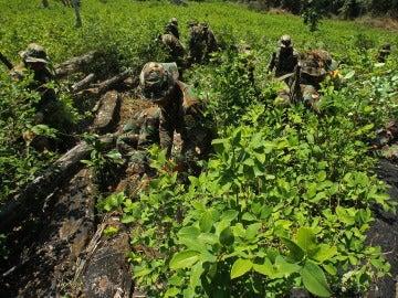 Policías y soldados bolivianos erradican un cultivo de coca en Bolivia