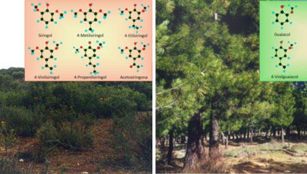 Como identificar los suelos que pueden almacenar mas carbono