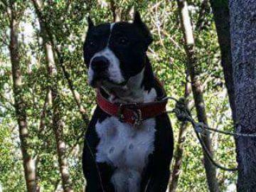 Tyson, el perro que ha sido asesinado por su dueño