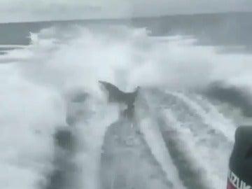 Buscan a los responsables de atar a un tiburón a una lancha y lo remolcaron violentamente