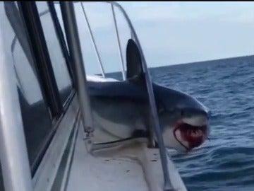 El tiburón atrapado en el barco