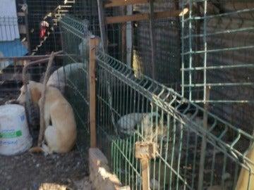 Algunos de los perros rescatados en condiciones infrahumanas