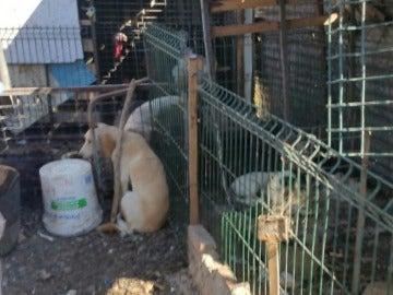 Algunos de los perros rescatados en Algeciras
