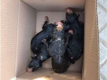 Imagen de archivo de varios cachorros en el interior de una caja