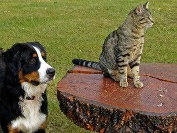 Los perros poseen más neuronas que los gatos