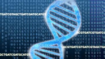 Identifican los genes esenciales en la inmunoterapia contra el cancer