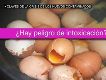Claves de la crisis de los huevos contaminados