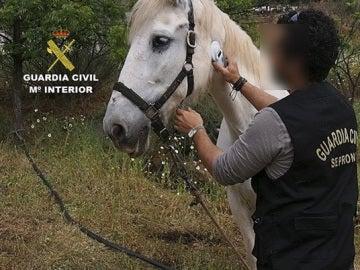Investigadas 50 personas por maltrato y abandono e intervenidos 316 animales