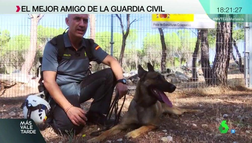 Perro de búsqueda de la Guardia Civil