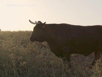 Una vaca