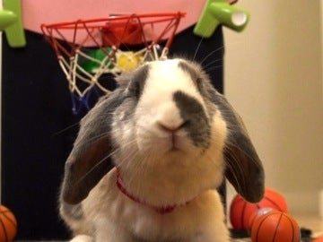 Conejo deportista