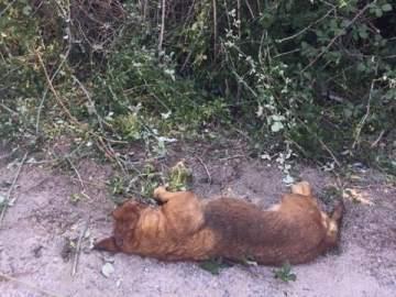 Imagen del perro tras el disparo