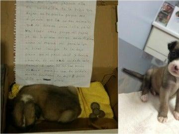 La perrita Cristalita en la caja donde la dejó su dueña y después en un centro de acogida