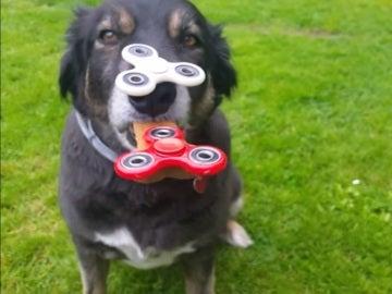 Buddy, con dos spinners en la cara