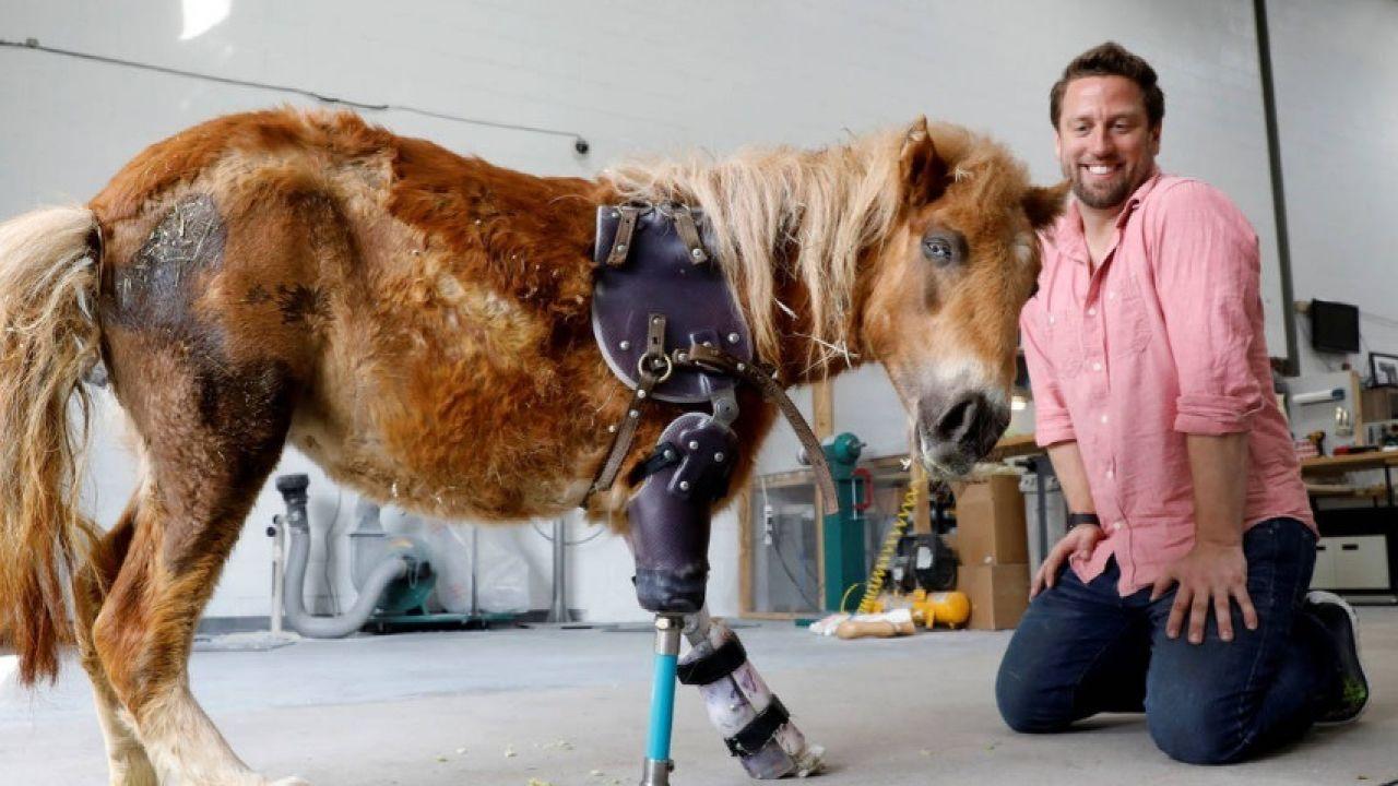 Derrick Campana junto a un poni con una prótesis