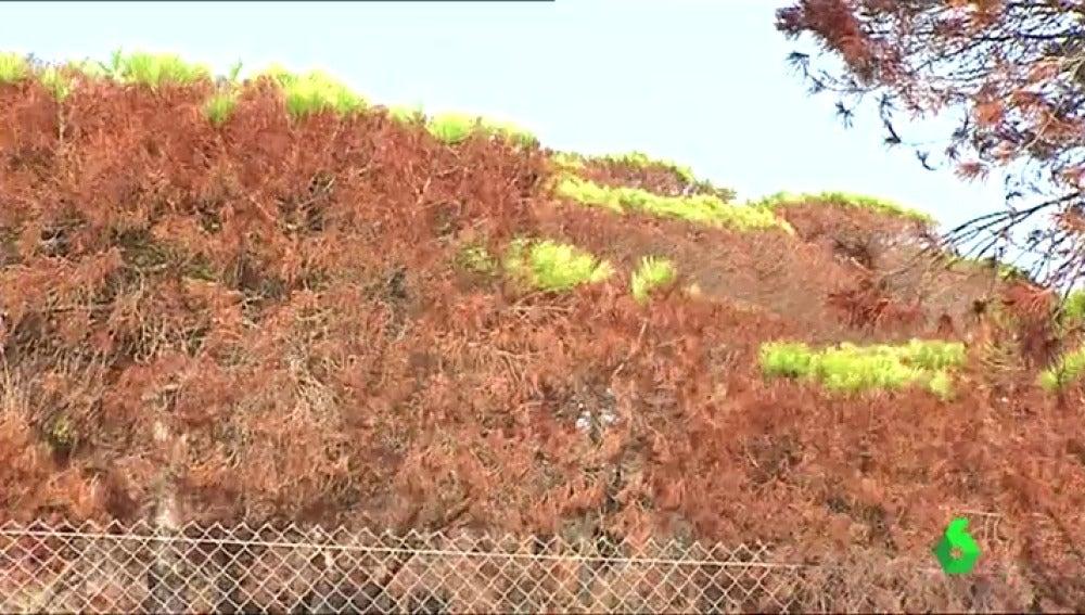Aparecen los primeros brotes verdes en el Parque Natural de Doñana