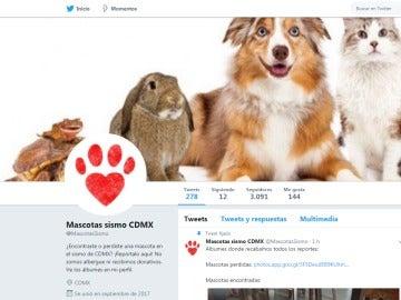 @MascotasSismo, la cuenta que actualiza a tiempo real las mascotas desaparecidas y encontradas durante el terremoto de México
