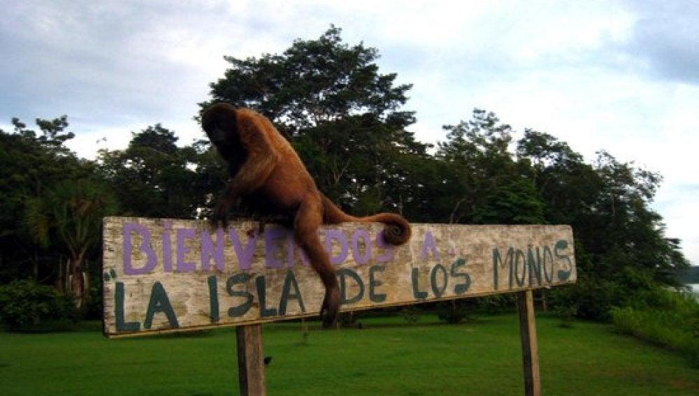 LA SEXTA TV | La Isla de los Monos, un santuario amazónico para ...