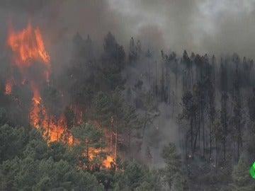 Las llamas arrasan más de 800 hectáreas en Ourense