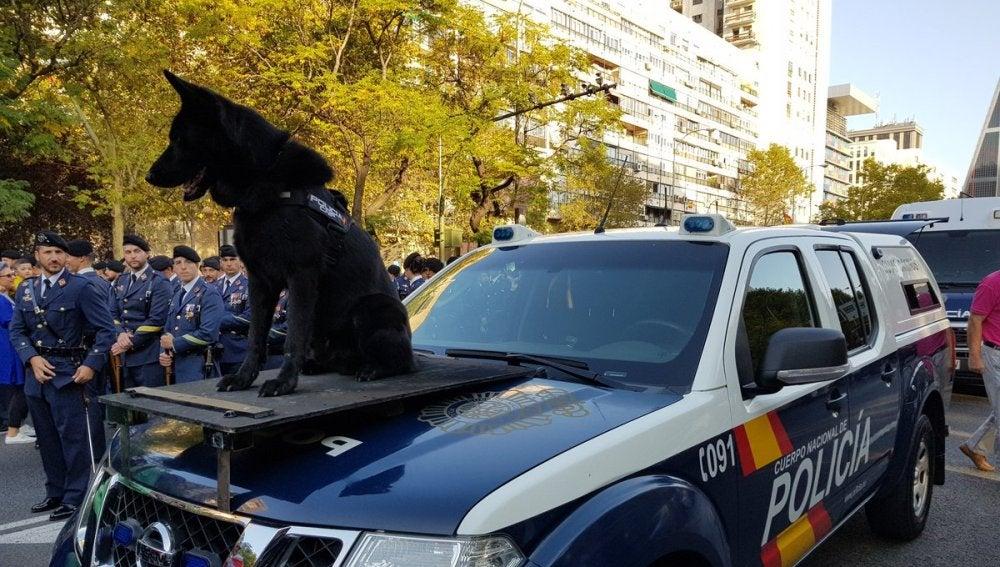 Perro de la Policia Nacional en el desfile de la Fiesta Nacional