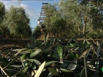 Vuelve a llover, pero no lo suficiente para combatir la sequía en los cultivos