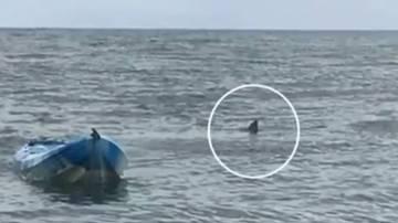Imagen del tiburón blanco que atacó a la adolescente