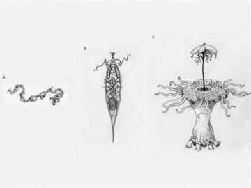 Los extraterrestres pueden ser más parecidos a nosotros de lo que nos pensamos