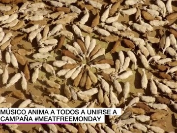 ¿Sabías que comer carne acelera el cambio climático?: #MeatFreeMonday, la campaña contra la 'agricultura animal' para salvar el planeta