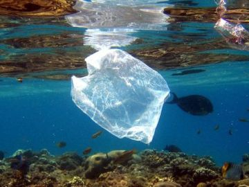 Plástico en organismos marinos