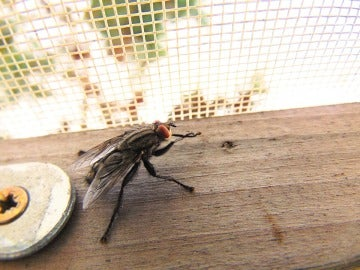Cuantas más ventanas y puertas al exterior tengamos, más fácil les resultará a los insectos entrar