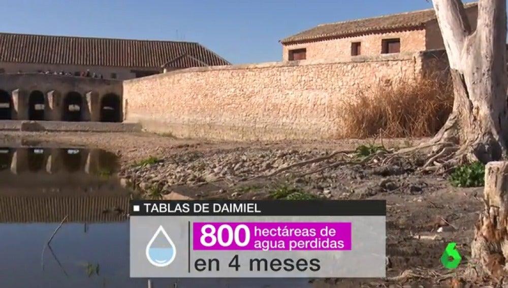 Miles de peces muertos o restricciones de agua , los terribles efectos de la sequía