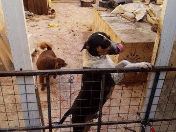 Uno de los perros rescatados en Valencia