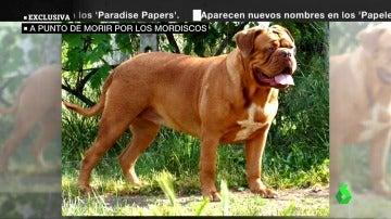Los perros que atacaron a una mujer de 82 años en Pontevedra no estaban identificados y permanecerán al cuidado de una protectora