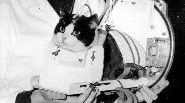 Félicette, el único gato que ha estado en el espacio