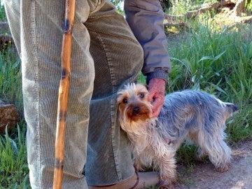 Imagen de un perro con su dueño