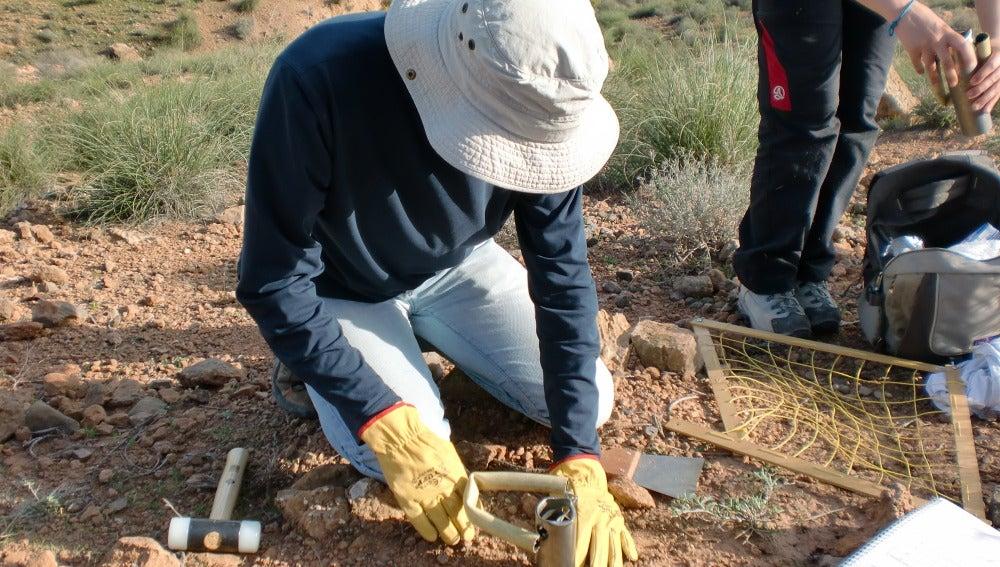 Los patrones ecologicos de las bacterias del suelo al descubierto