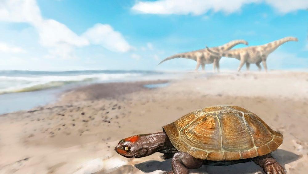El increible viaje de la primera tortuga africana que llego a Europa