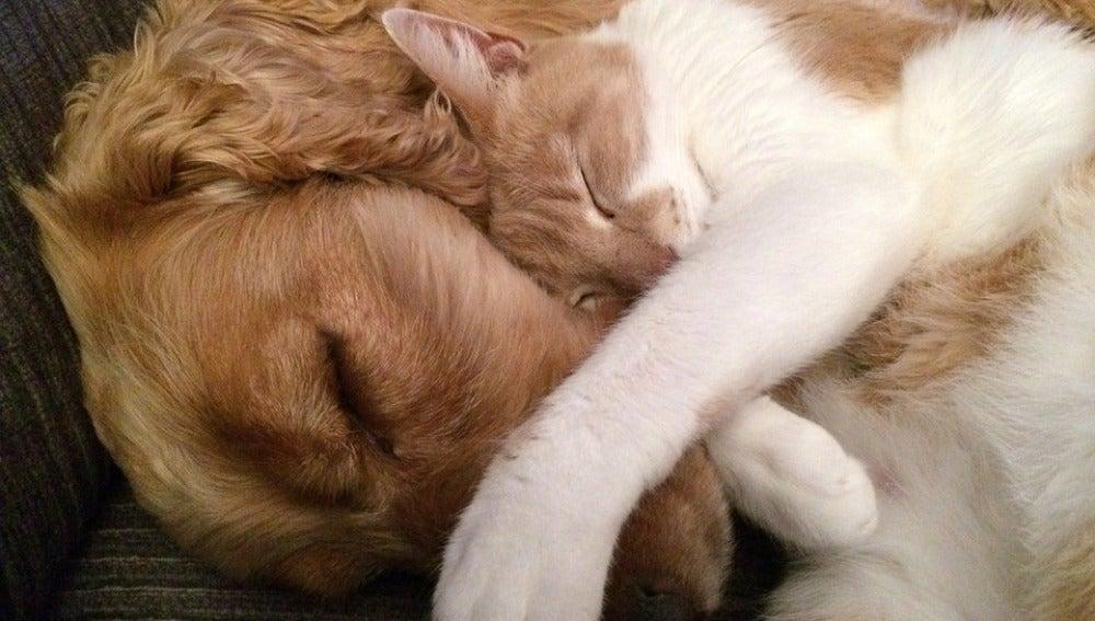 Amor entre perro y gato