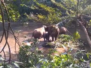 El momento en el que un elefante agradece la solidaridad de los agentes forestales