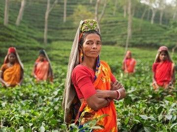 Mujeres trabajando en los campos de la India