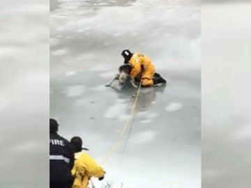 Momento del rescate de un perro atrapado en el hielo
