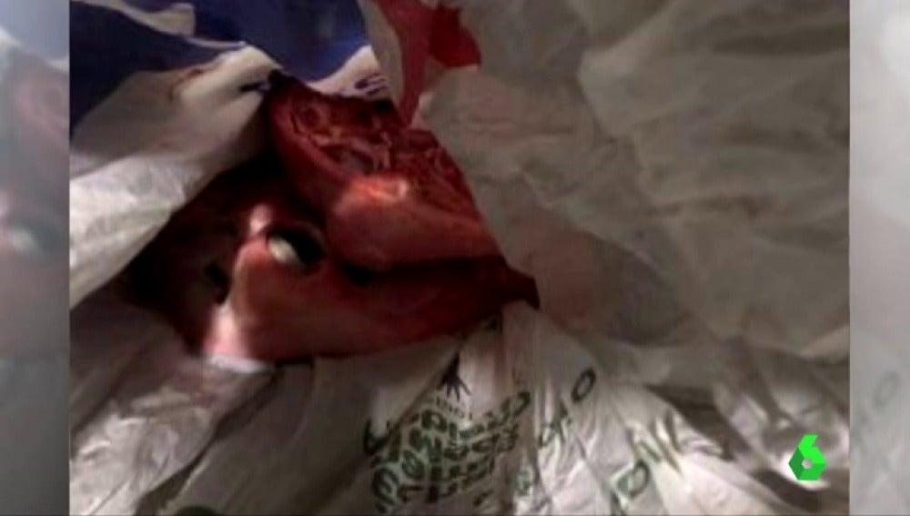 Dejan una cabeza de cordero ensangrentada en una mesa informativa de Ciudadanos en Barcelona
