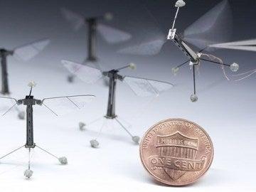 'Robots insecto' desarrollados por Harvard