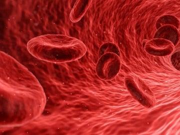 Foto ampliada de los glóbulos rojos de la sangre