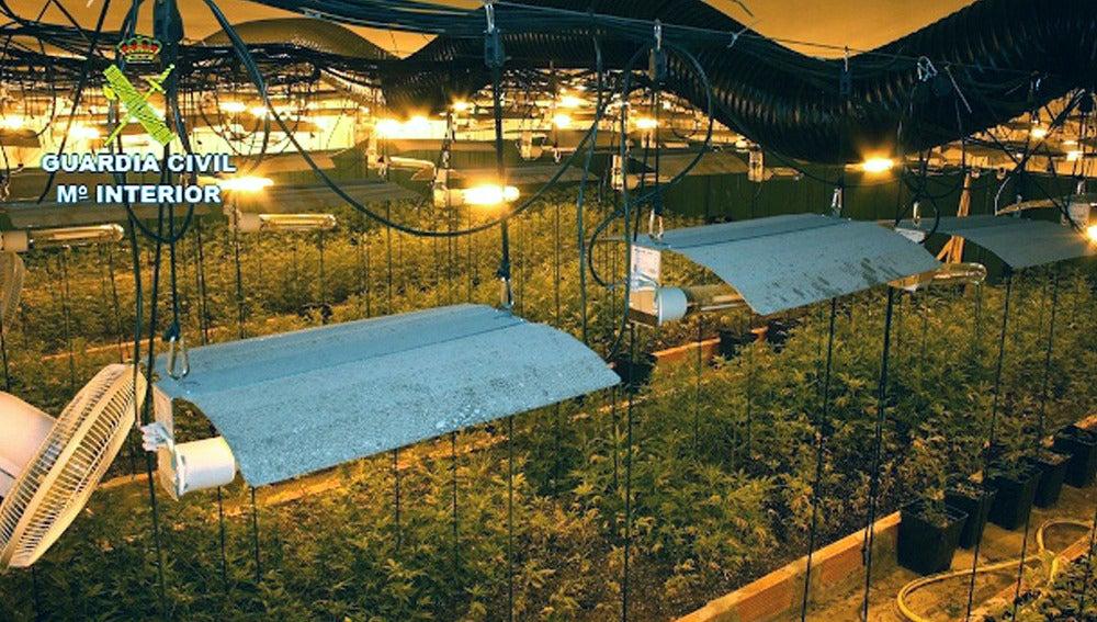 Fotografía facilitada por la Guardia Civil del desmantelamiento de una organización dedicada al cultivo de marihuana en Llinars del Vallès, Barcelona
