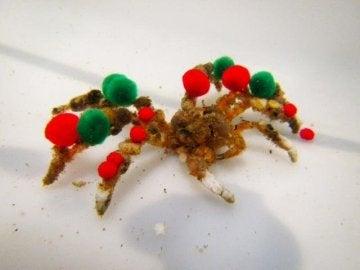 Suelen utilizar organismos vivos, pero también se cubren de pompones si los tienen a mano