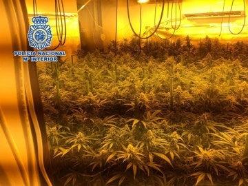 Imagen de uno de los laboratorios de marihuana desmantelados por la policía en Vélez-Málaga