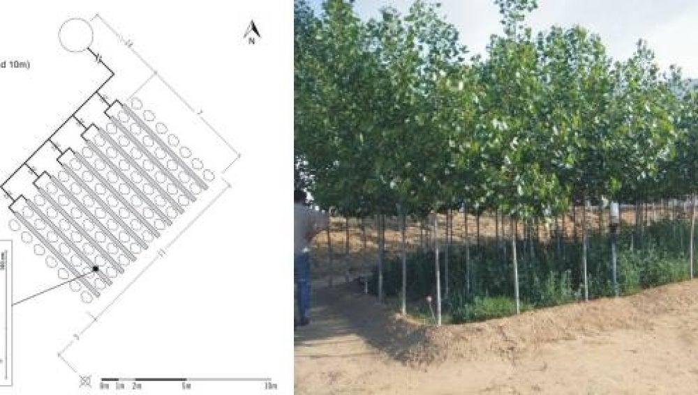 Plantaciones forestales para eliminar farmacos y estimulantes en aguas residuales