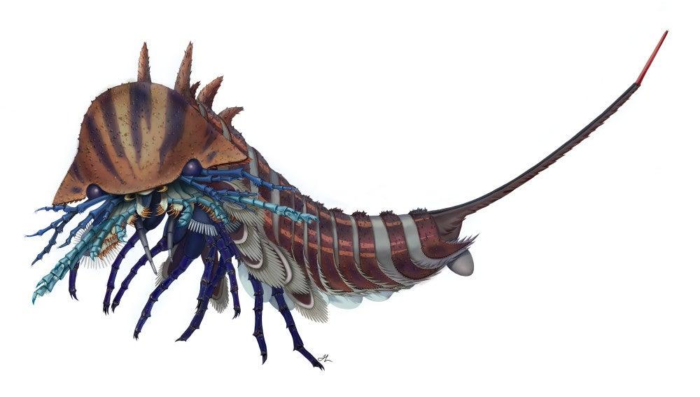 Un depredador marino con cabeza de navaja vivio hace 508 millones de anos