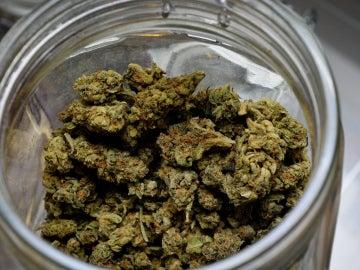 La marihuana terapéutica sustituye el consumo de otros opiáceos